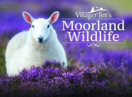 Villager Jim's Moorland Wildlife