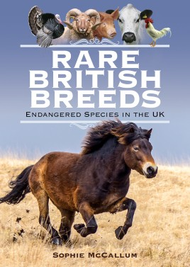 Rare British Breeds