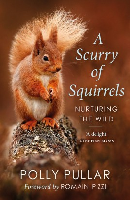 A Scurry of Squirrels